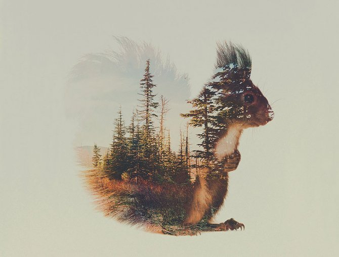 double-exposure-animal-photography-andreas-lie-8__880-670x509